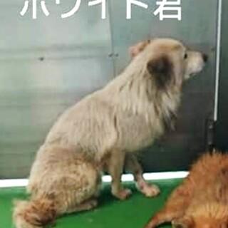 犬舎①野犬のホワイト君♂