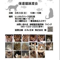 8/23(日)本八幡駅北口一番街入口譲渡会開催