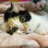 美猫さんな古都ちゃん