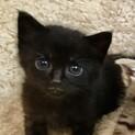推定7月20日生まれ!黒猫の蓮(れん)くん