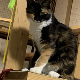 福島市多頭飼育崩壊からのレスキュー猫ちゃん