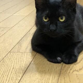 黒猫★ふわちゃん★ボール遊びが大好きな女の子