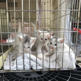 3匹の保護猫の残り1匹の里親募集中