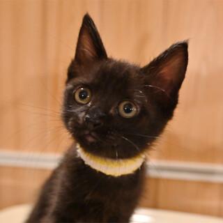 元気な可愛い黒猫ちゃん^^