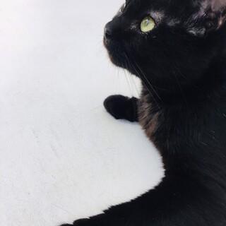 黒猫★チェルちゃん★人間が大好きな女の子