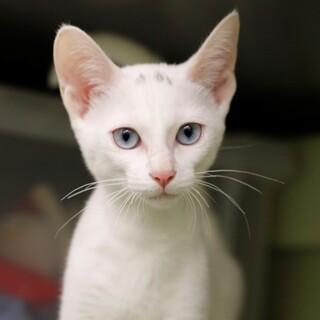 譲渡対象猫のご紹介 721-1