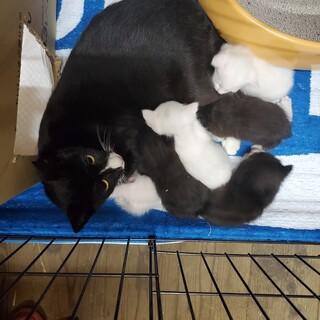 残り3匹の子猫ちゃん。