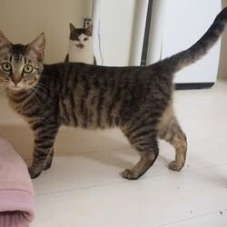 予約制猫のはこぶね里親会 サムネイル1