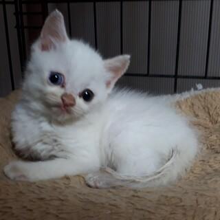 脳障害白猫