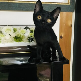 センターより保護した黒猫の女の子