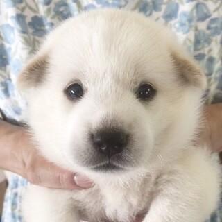 保護犬ナンバーD1446 中型犬仔犬
