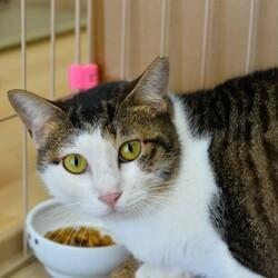 10月限定【野崎参道商店街】大人猫の譲渡会 サムネイル2