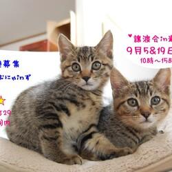 猫の譲渡会 IN 瀬戸 ~ ちーむにゃいんず 2020年9月19日開催 サムネイル1