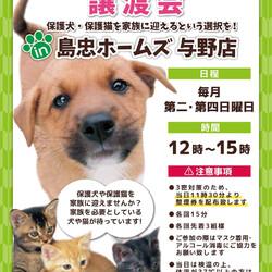 保護犬 保護猫 譲渡会 in ホームズ与野