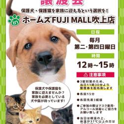 保護犬 保護猫 譲渡会inホームズFUJI MALL 吹上店
