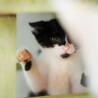 杏仁。生後1ヶ月半。男の子。