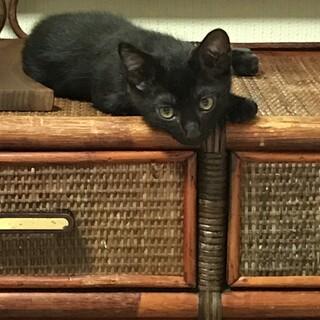 大人しく控えめの黒猫ちゃん