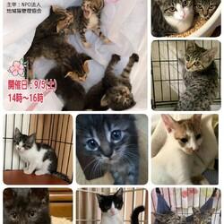 9/5(土)子猫のお見合い会