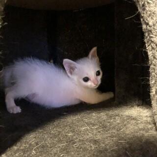 ちいさな 可愛い白猫ちゃん