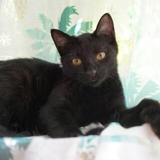 【赤ピーマン】なつこいスリゴロ少女黒猫