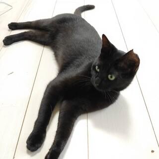 スリムで手足がスラリと長いイケニャン黒猫★たける君