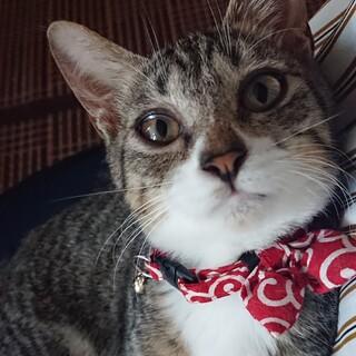 「募集停止」保護子猫推定4ヶ月人懐こい女の子