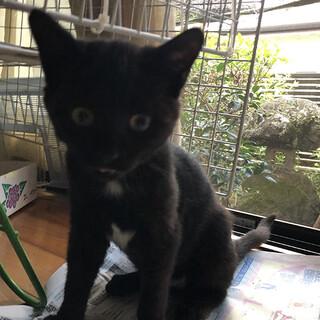 黒に3ポイントのかわいい仔猫