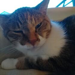 先住猫が発熱