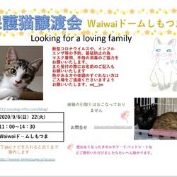 保護猫譲渡会:waiwaiドームしもつま