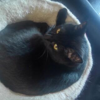 黒猫のマシュー、主人を亡くして寂しがっています。