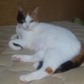 三毛猫のメイ、主人を亡くして寂しがっています