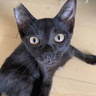 4ヶ月黒ネコ「ひばなちゃん♡」