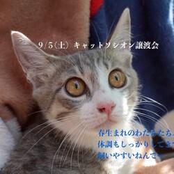 *子猫が中心譲渡会*