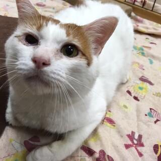 保護猫のご紹介!あまえんぼうのつがわさん!