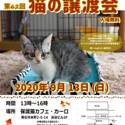 明石【猫の譲渡会】猫まみれwithカーロ 第62回