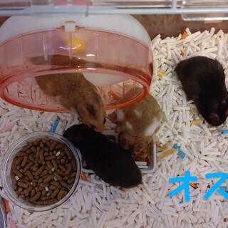 ゴルハム赤ちゃんの里親さん募集!!(7/22生)