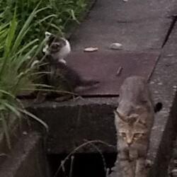 野良猫親子の捕獲