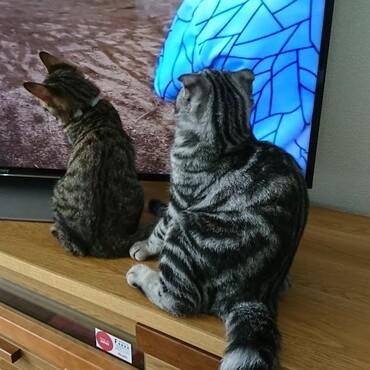 夫が観てるラジコンの動画に夢中