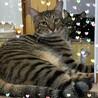 大猫だよ!!。。。♪貴一(きいち)くん サムネイル2