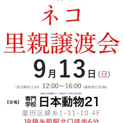 東京 錦糸町 ネコの里親譲渡会(11:45〜受付開始)