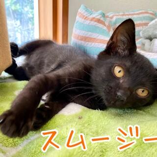 チビッ子黒猫姉妹スムージー&プリン