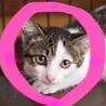 4ヶ月♀キジ白♡猫初心者向けサラダ