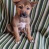 フレンドリーで賢こそうな3ヶ月の子犬 サムネイル3