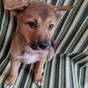 フレンドリーで賢こそうな3ヶ月の子犬 サムネイル4