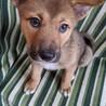 フレンドリーで賢こそうな3ヶ月の子犬 サムネイル5