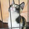 三色きれいに入りました♪美形のゴロゴロ猫シンディ サムネイル3
