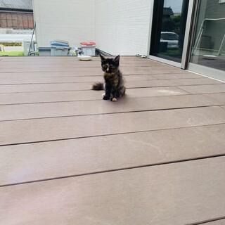 野良の子猫ですが、とても上品なサビ猫ちゃんです
