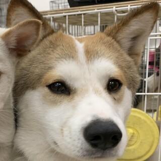 【竹千代】♂ 推定1才 野犬レスキュー
