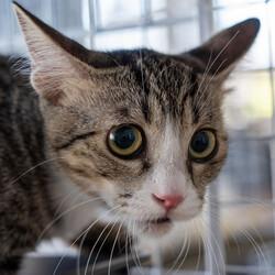 子猫中猫15匹参加確定【譲渡会緊急開催】 サムネイル3