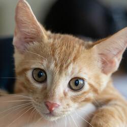 子猫中猫15匹参加確定【譲渡会緊急開催】 サムネイル2